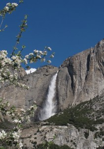 Yosemite Falls with Apple Blossoms