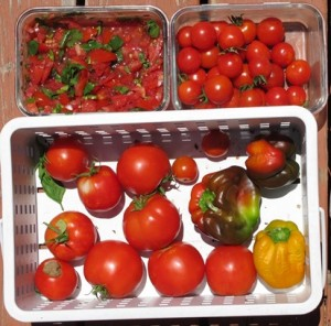Peppers, tomatoes, and cherry tomatoes
