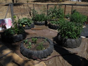 Tractor Tire Planters