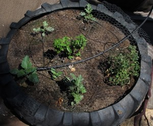 Tire Irrigation System