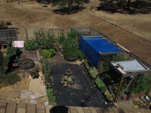 Bird's Eye View of Garden