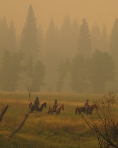 Yosemite Valley Horses